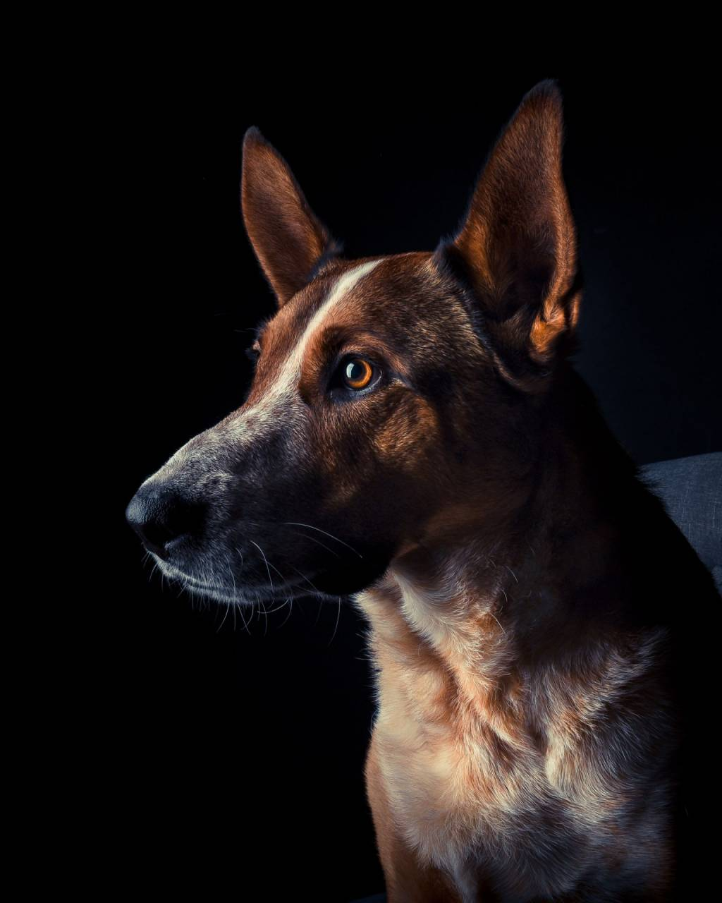 Portrait-126